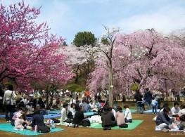 Nhật Bản cùng sắc hoa anh đào