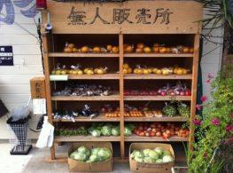 Bài học về phép thử lương tâm và cách sống đáng noi gương chỉ có ở Nhật