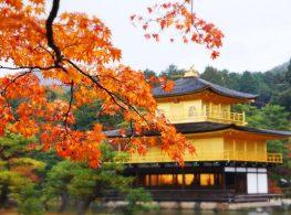 Ngắm mùa lá đỏ Tokyo