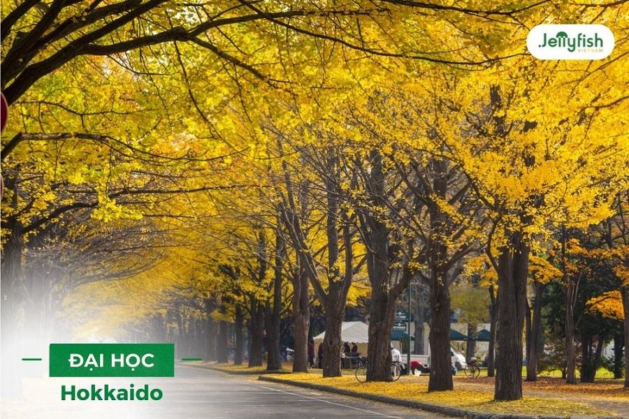 Con đường mùa thu nổi tiếng tại Đại học Hokkaido