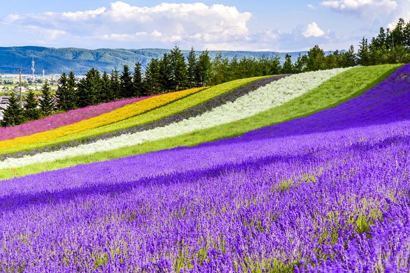 Đi du học ở Hokkaido Nhật Bản