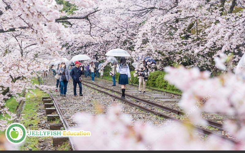 Mùa xuân ở Nhật