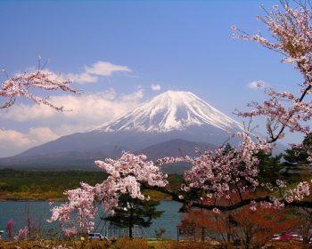 Dù có chịu tàn phá nặng nề như thế nào thì với tính cách, với con người Nhật, săc hoa anh đào vẫn sẽ luôn nở thắm trên xứ sở đất nước Phù Tang