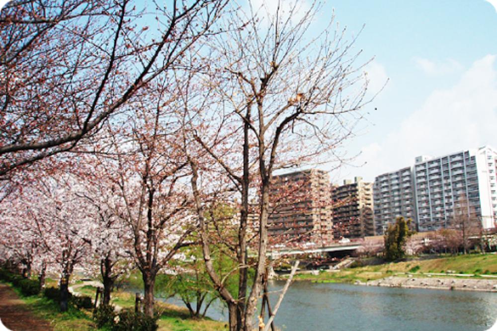 Trường ngôn ngữ Kyushu Nichigo